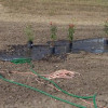 Sep 1, 2010: Landscaping, Rain Garden